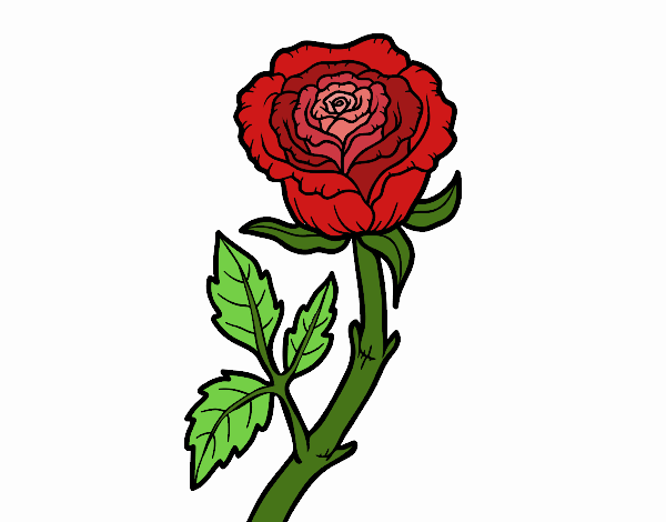 Coloring page Wild rose painted bySkye