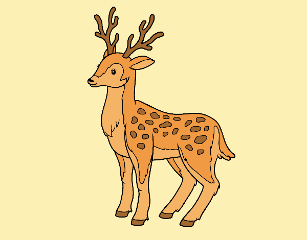 Coloring page A young deer painted bylorna