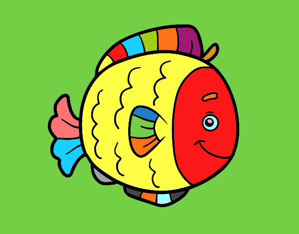 Childrish fish