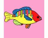 Fish 4a