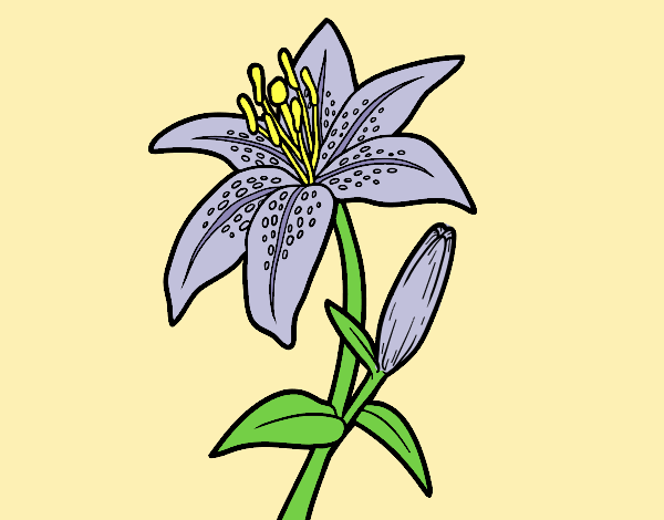 Coloring page Madonna lily painted bylorna