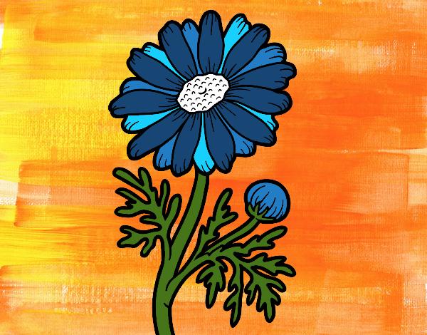 blue bloomer