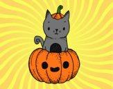 A Halloween kitten