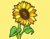 Coloring page A sunflower painted byLornaAnia