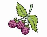 Branch of raspberries