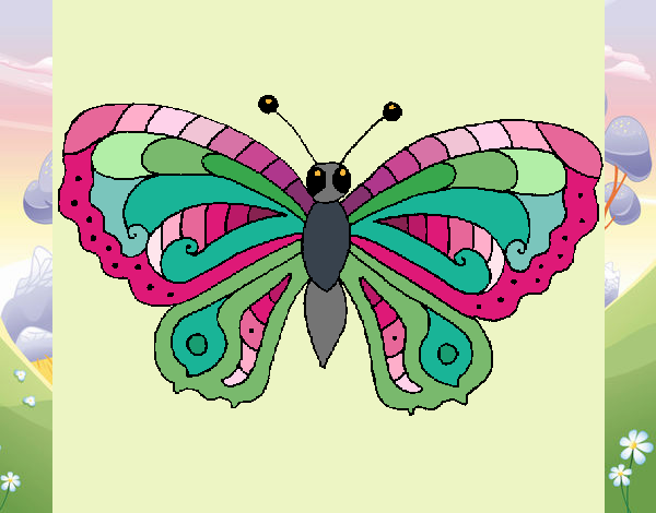 Butterfly 3a