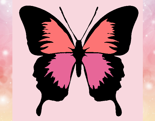 Butterfly with black wings