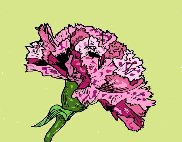 Coloring page Carnation flower painted byJena