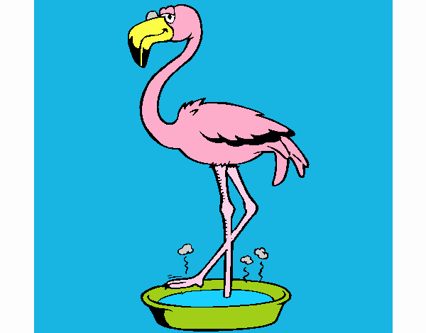 Flamingo with soaking feet