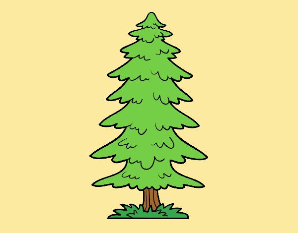 Great fir tree