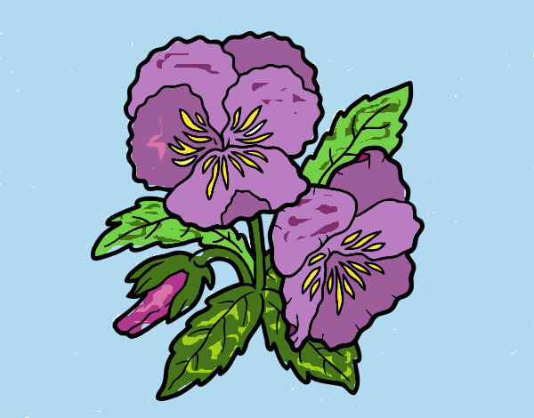 Coloring page Heartsease flowers painted byJena