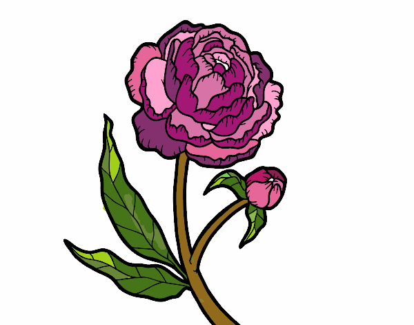 Coloring page Peony painted byJena