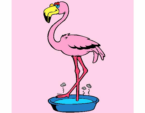 Flamingo feet washing centre