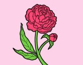Coloring page Peony painted byLornaAnia