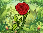 Coloring page Wild rose painted byJakeMaster