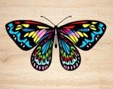 Alexandra butterfly