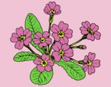 Coloring page Primula painted byLornaAnia