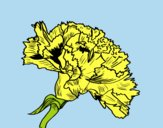 Coloring page Carnation flower painted byLornaAnia