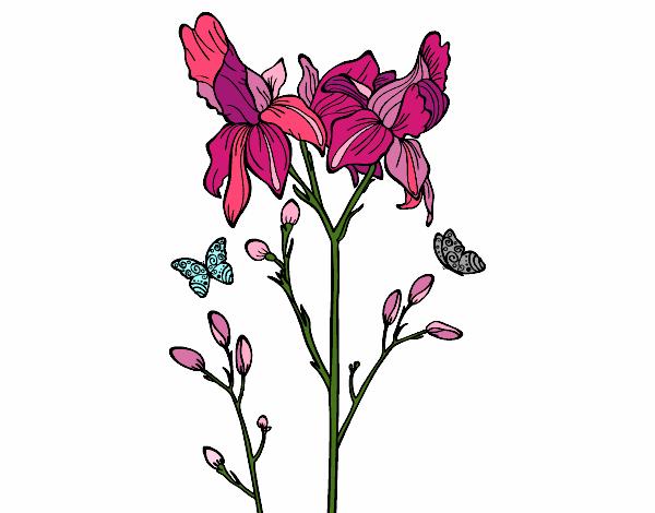 Coloring page Iris flower painted byKCurcio