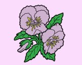 Coloring page Heartsease flowers painted byLornaAnia