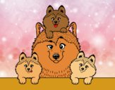 Coloring page Husky family painted byalexadra