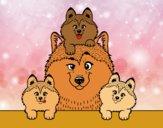 Coloring page Husky family painted byalexadra
