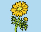 Coloring page Wild daisy painted byLornaAnia