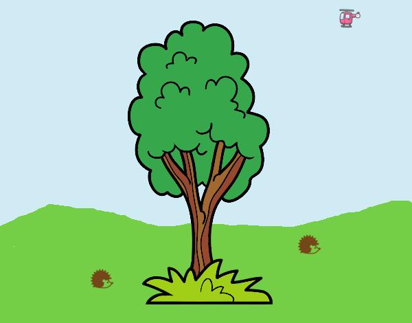 A park tree