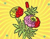 A wonder flower