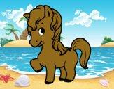 A baby foal