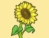 Coloring page Sunflower flower painted byLornaAnia