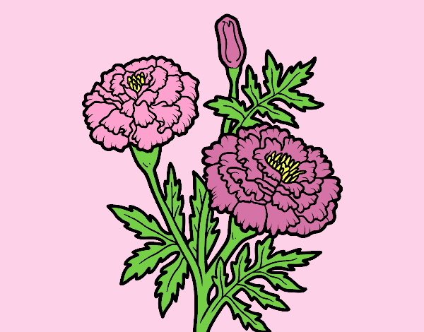 Coloring page A wonder flower painted byLornaAnia