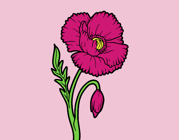 Coloring page A poppy flower painted byLornaAnia