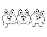 3 puppies coloring page