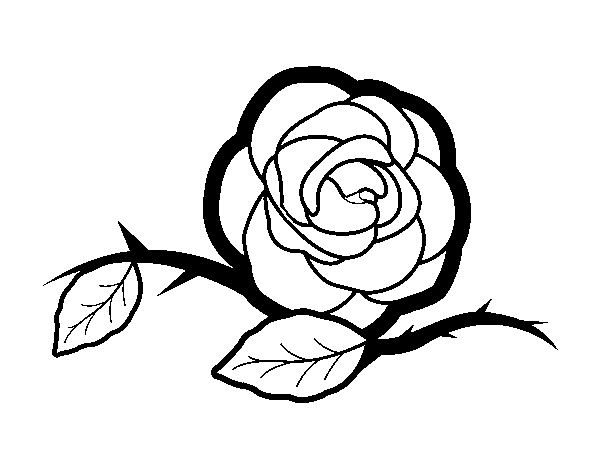 A beautiful rose coloring page