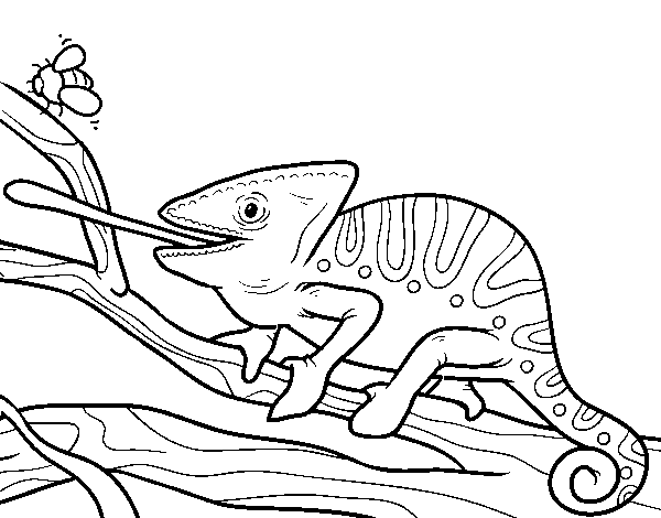 A chameleon with the tongue out coloring page