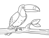 A toucan coloring page