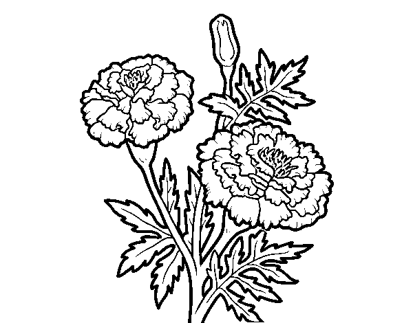 A wonder flower coloring page