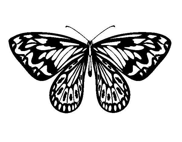 Alexandra butterfly coloring page