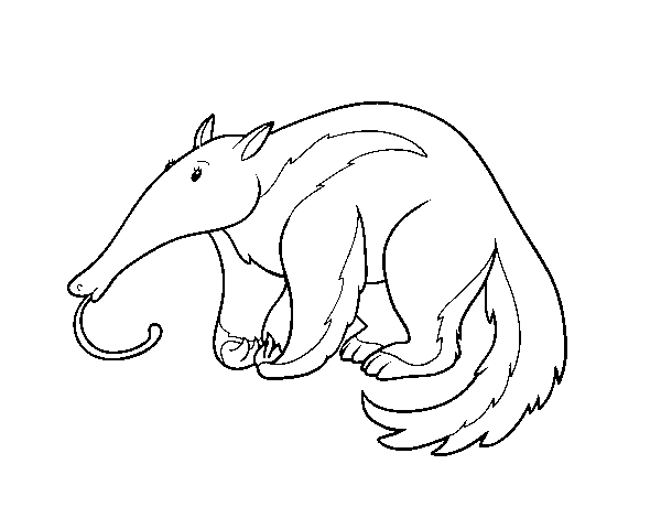 An Aardvark coloring page