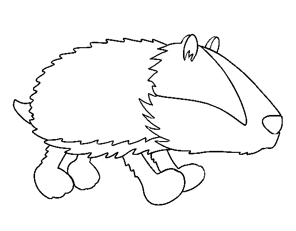 Badger walking coloring page