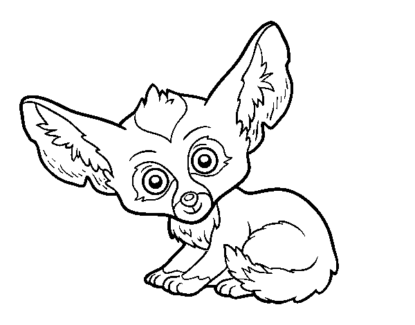 Fennec fox coloring page