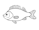 Perch coloring page