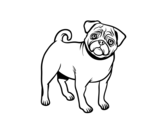 Pug dog coloring page