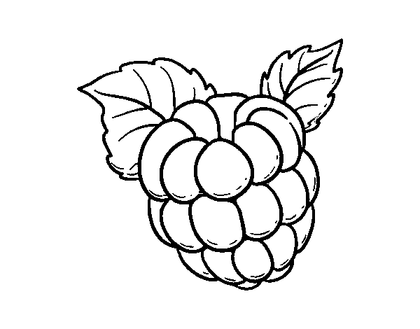 Raspberry coloring page Coloringcrew