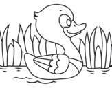River duck coloring page