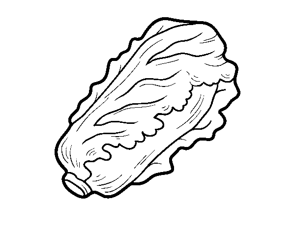 Romaine lettuce coloring page