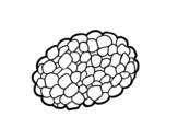 Tuber coloring page