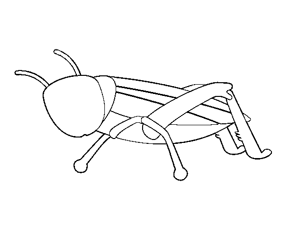 Young grasshopper coloring page