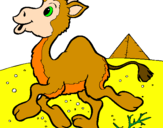 Coloring page Camel painted byamramr